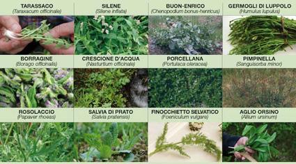 Riconoscimento e raccolta erbe spontanee - Piante per la cucina ...
